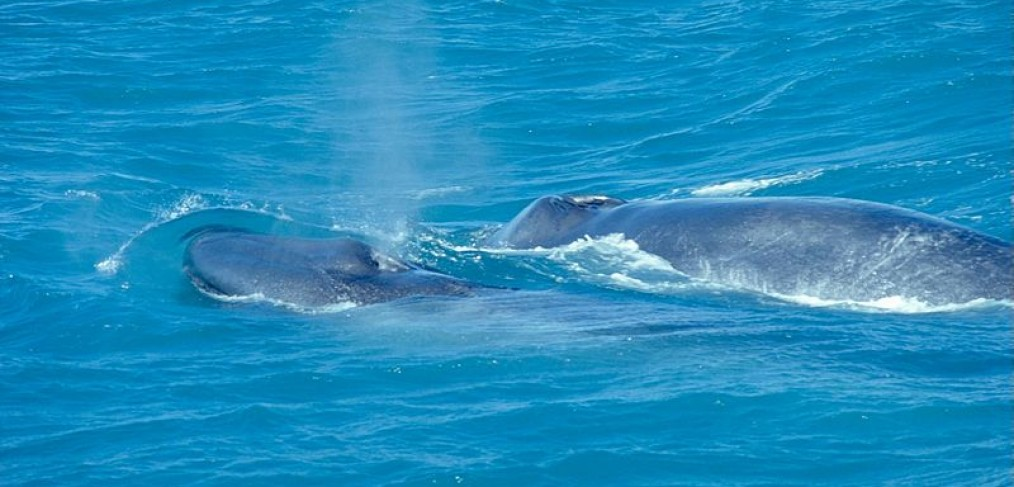 yoga walvis baby